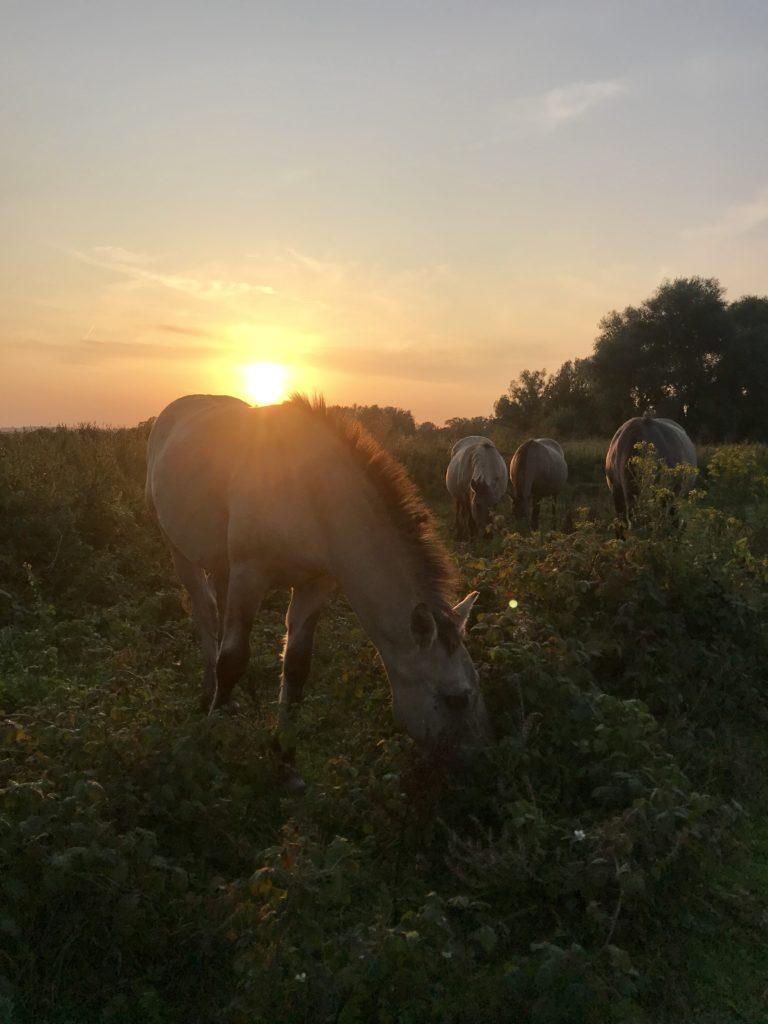 Arnhem ontdekken tijdens het hardlopen: Meinerswijk